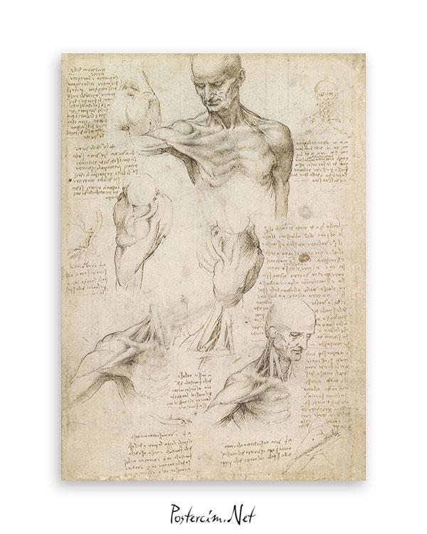 yüzeysel-omuz-ve-boyun-anatomisi-afisi