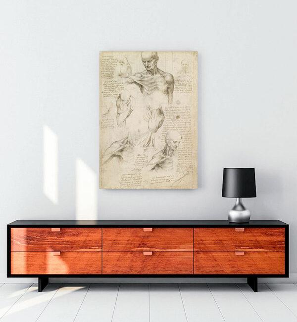 yüzeysel-omuz-ve-boyun-anatomisi-kanvas-tablo