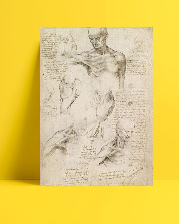 yüzeysel-omuz-ve-boyun-anatomisi-posteri